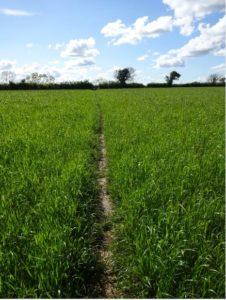 field recording#1 poem